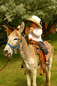 Young cowboy on a burro